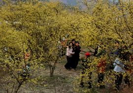 festival-corea-primavera.jpg