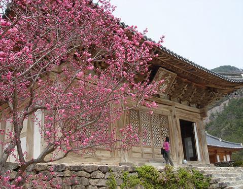 korea-primavera.jpg