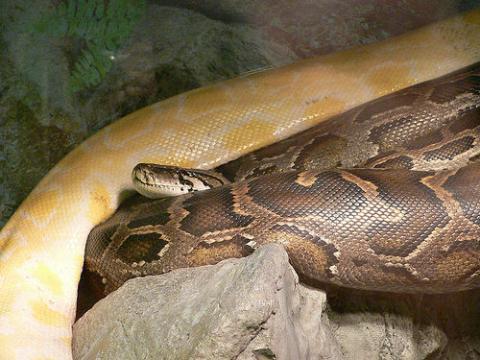 serpiente-corea.jpg