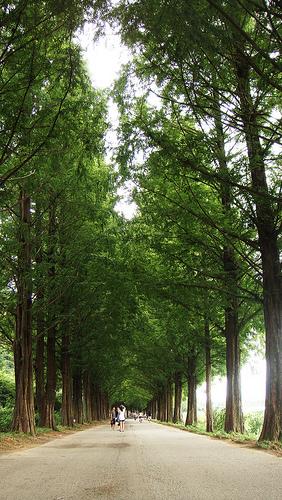 bosque-corea.jpg