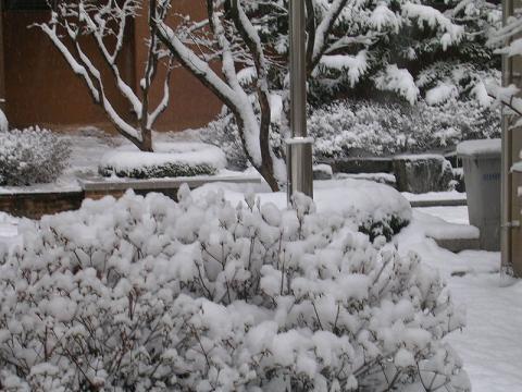nieve-seul.JPG