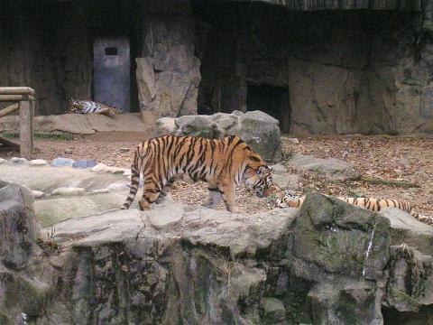 zoo-seul.jpg