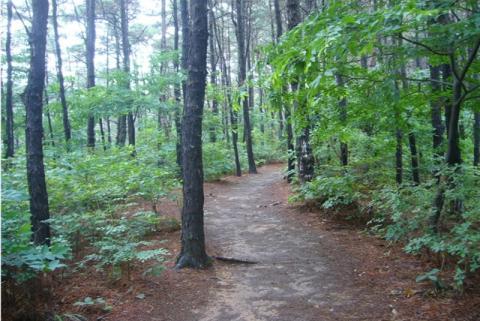 bosque-coreano.jpg